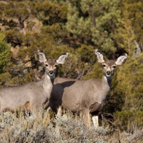 Colorado searches for those who partially wasted deer meat