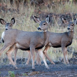 Wyoming uses targeted sampling to monitor CWD