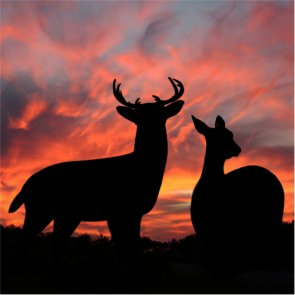 Night hunting legalized in parts of Wisconsin