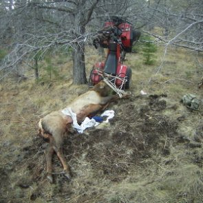 Hunter impales himself on elk post-hunt