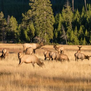 Hunters sound off about Colorado elk populations