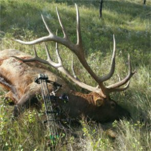 Bowhunter arrows possible new P&Y record elk