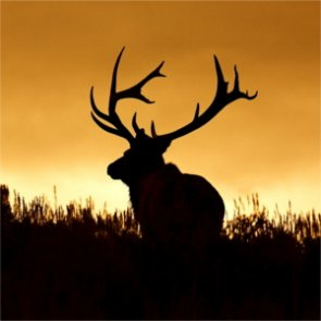 Montana uses B&C scoring to determine higher fines for trophy poachers