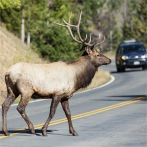 Wild elk spotted in South Carolina