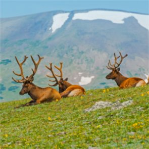 RMEF awards $88,203 to Nevada for habitat and hunting projects