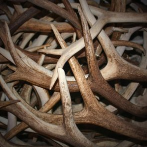Colorado reported increase of shed hunting violators