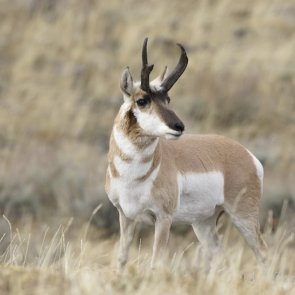 Idaho 2014 controlled hunt results