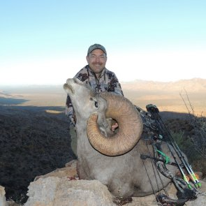 Desert bighorn could be new world record