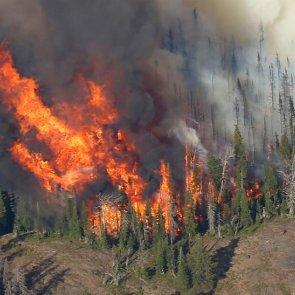 Washington wildfires destroy mule deer habitat