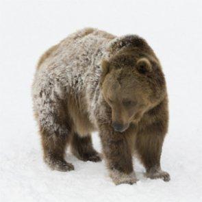 Senate lifts hunting restrictions on Alaska wildlife refuges