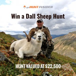 INSIDER giveaway: Win a Dall sheep hunt