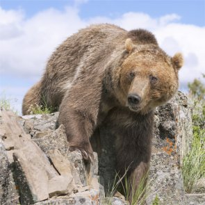 Protest held in response to NHL player illegally killing grizzly