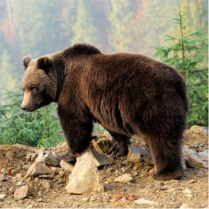 US Fish & Wildlife proposes delisting grizzlies