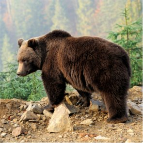 Strong support against delisting grizzlies in Montana
