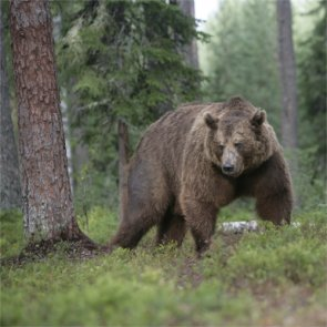 Wyoming sued over proposed grizzly hunt
