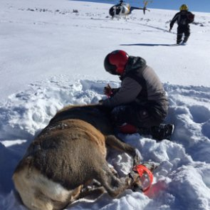 Gunnison Basin mapping project uncovers elk movement patterns