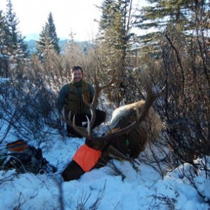 First bulls collared for elk study