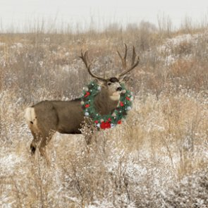 Holiday gift ideas for even the pickiest of hunters
