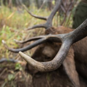 Lessons learned from a 2020 archery elk hunt — Part 2