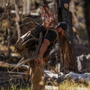 Why you should hunt elk before or after the
