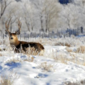 Winter is prime time for poaching mule deer