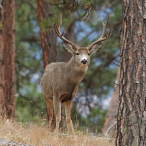 New decision results in permanent protection of the Wyoming Range
