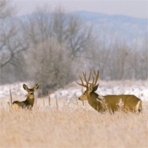 Wyoming biologists forecast probable winter kill