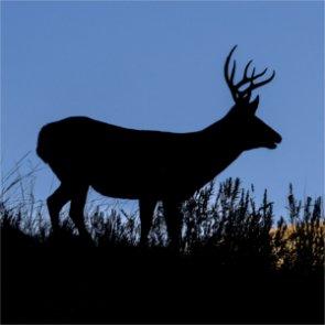 CWD spreads across Wyoming