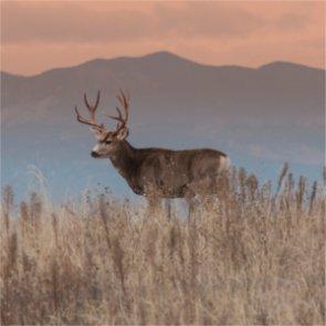 New Mexico mule deer die from disease