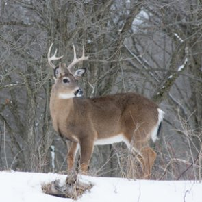 Five Michigan wildlife disease lab workers test positive for tuberculosis