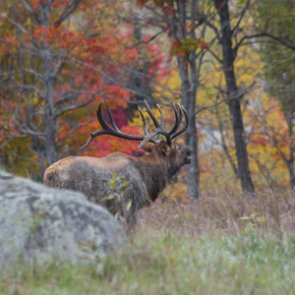 Montana's big game season begins with a bang