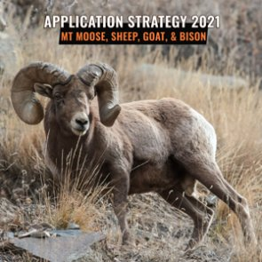 APPLICATION STRATEGY 2021: Montana Sheep, Moose, Goat, Bison