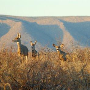 Montana seeks public comment on new muzzleloader season
