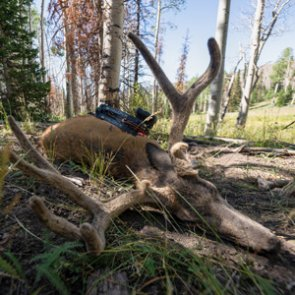 Perks of hunting the opening week of the mule deer archery season