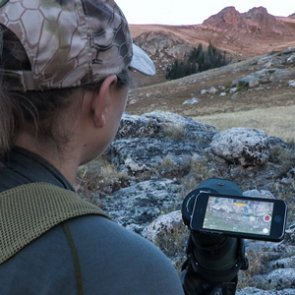 Making the most of your summer mule deer scouting