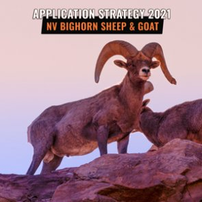 APPLICATION STRATEGY 2021: Nevada Sheep and Mountain Goat
