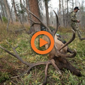 New Mexico Deer and Elk Application Strategy — Q&A Video