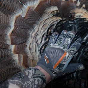 Montana nonresident spring turkey and black bear hunting suspended due to COVID-19