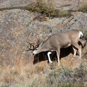 Tennessee man questioned after posing as North Dakota hunting guide