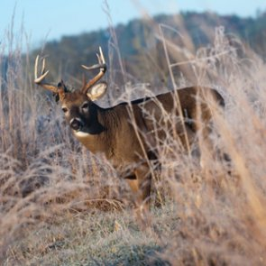 Refunds available for North Dakota whitetail hunters