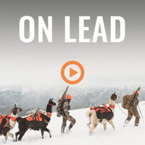 ON LEAD - A Wyoming rifle mule deer hunt