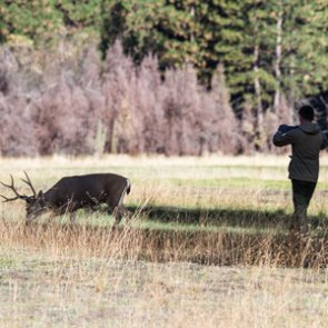 Oregon city considers deer cull
