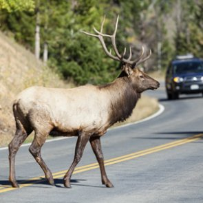 Oregonians: stock your freezer with roadkill