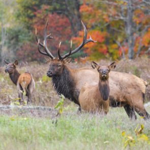 Outdoor Channel star guilty of poaching Wyoming elk