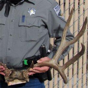 Trophy mule deer poached