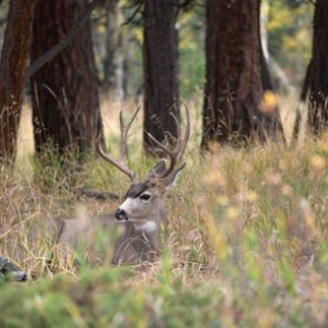 South Dakota considers changes to nonresident hunting regulations