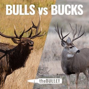 theBULLET - 33 great responses: Bulls vs bucks and why?