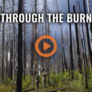 THROUGH THE BURN - A New Mexico Archery Elk Hunt