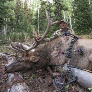 Executing a Shot — Archery Bull Elk