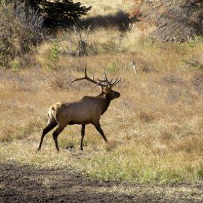 Deer and elk suffer during Utah drought